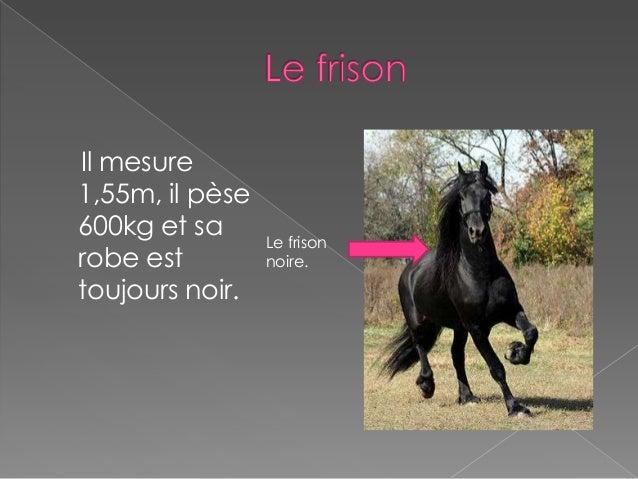 Expos 233 66 Les Chevaux Aur 233 Lie