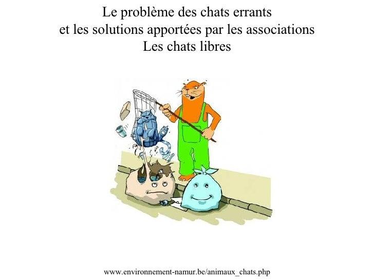 Le problème des chats errants et les solutions apportées par les associations Les chats libres www.environnement-namur.be/...