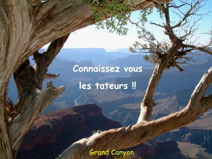 Grand Canyon Connaissez vous les tateurs !!