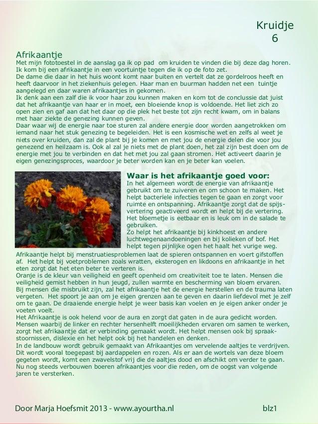Kruidje6Door Marja Hoefsmit 2013 - www.ayourtha.nl blz1AfrikaantjeMet mijn fototoestel in de aanslag ga ik op pad om kruid...