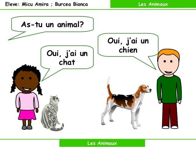 Eleve: Micu Amira ; Burcea Bianca                        Les Animaux      As-tu un animal?                                ...