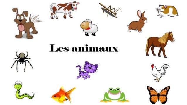un chien un chat une vache un poisson rouge une araignée un grenouille un papillon un poulet un phasme un hamster un lapin...