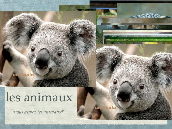 les animaux  vous aimez les animaux?                             1