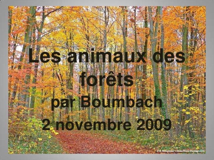 Les animaux des forêts <br />par Boumbach<br />2 novembre 2009<br />