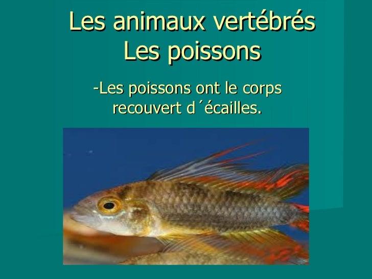 Les animaux vertébrés     Les poissons  -Les poissons ont le corps     recouvert d´écailles.