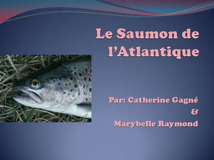 Le Saumon de l'Atlantique<br />Par: Catherine Gagné<br />&<br />MarybelleRaymond<br />