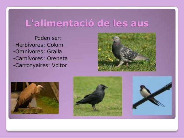 L'alimentació de les aus Poden ser: -Herbívores: Colom -Omnívores: Gralla -Carnívores: Oreneta -Carronyaires: Voltor