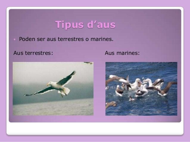 Tipus d'aus   Poden ser aus terrestres o marines.  Aus terrestres:  Aus marines:
