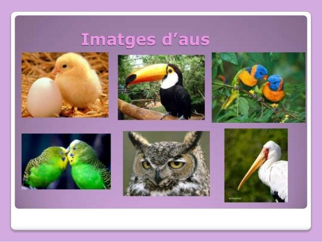 Imatges d'aus