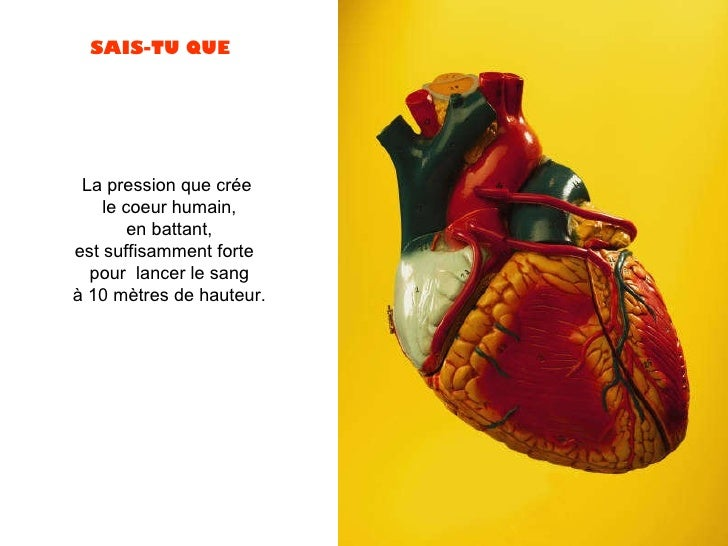 La pression que crée  le coeur humain,  en battant,  est suffisamment forte  pour  lancer le sang  à 10 mètres de hauteur.