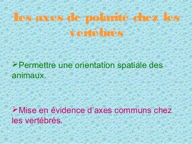 L axes de polarité chez les es       vertébrésPermettre une orientation spatiale desanimaux.Mise en évidence d'axes comm...