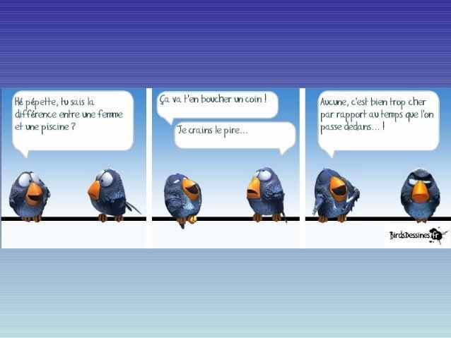 Les birds express!
