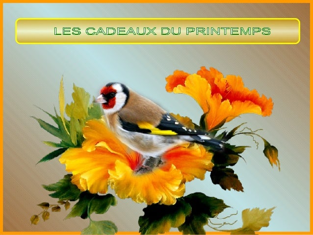 Chants divers d'oiseaux