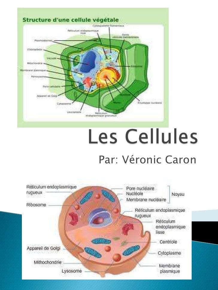 Les Cellules<br />Par: Véronic Caron<br />