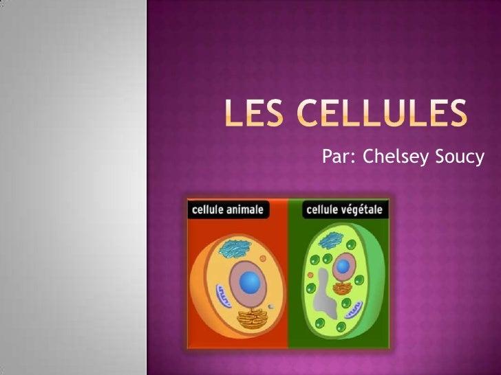 Les cellules<br />Par: Chelsey Soucy<br />