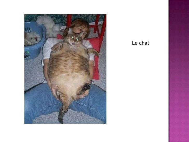 Le chat<br />