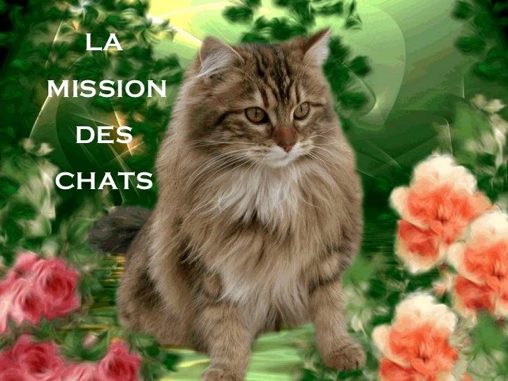 LA MISSION DES CHATS