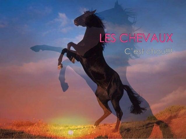 JE T'AIME!!!!!!!    L'amour d'un cheval est plus fort que TOUT ; )