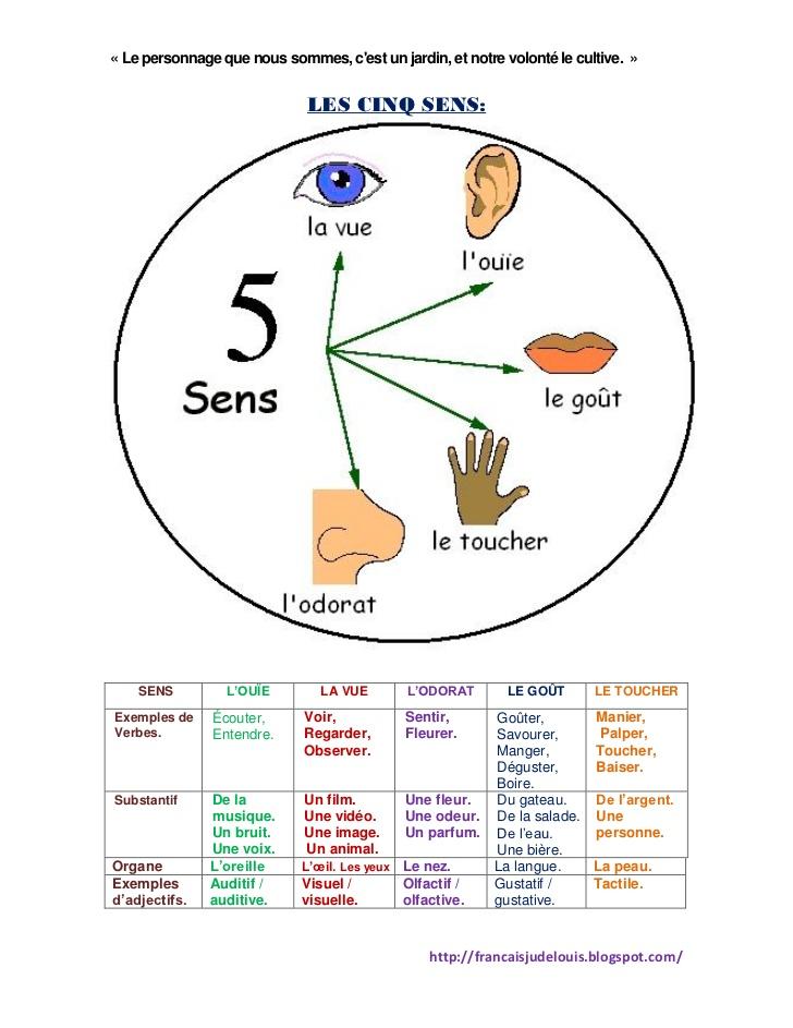 Favorit Les cinq sens de l'humanité GV44