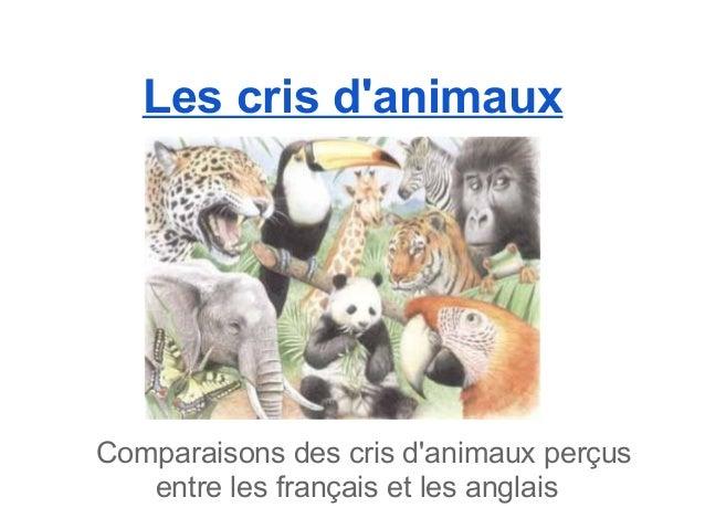 Les cris danimauxComparaisons des cris danimaux perçus   entre les français et les anglais