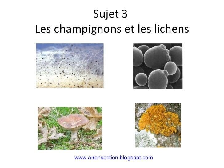 Sujet 3  Les champignons et les lichens www.airensection.blogspot.com