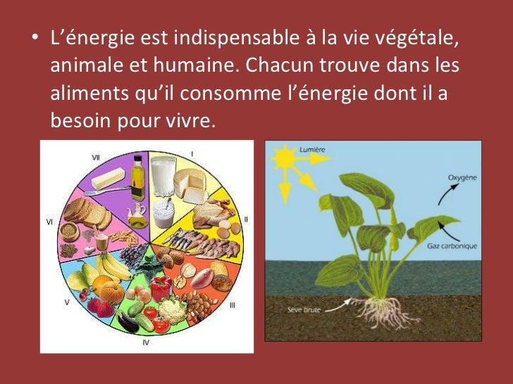 <ul><li>L'énergie est indispensable à la vie végétale, animale et humaine. Chacun trouve dans les aliments qu'il consomme ...