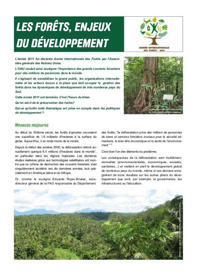 L'année 2011 fut déclarée Année Internationale des Forêts par l'Assem- blée générale des Nations Unies. L'ONU voulait ains...