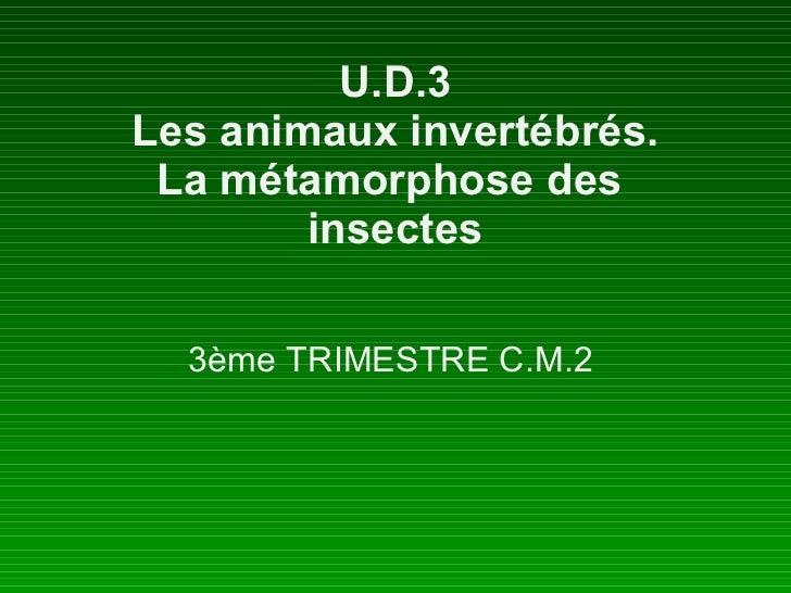 U.D.3 Les animaux invertébrés. La métamorphose des  insectes 3ème TRIMESTRE C.M.2