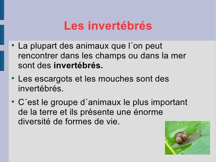 Les invertébrés    La plupart des animaux que l´on peut    rencontrer dans les champs ou dans la mer    sont des invertéb...