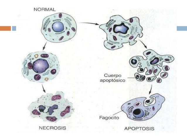 Regulacion del ciclo celular yahoo dating 5