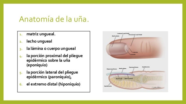Lesiones del lecho ungueal