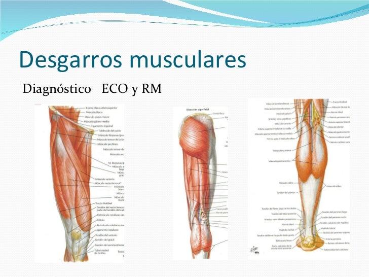 Encantador Muscular Del Brazo Y El Antebrazo Galería - Anatomía de ...