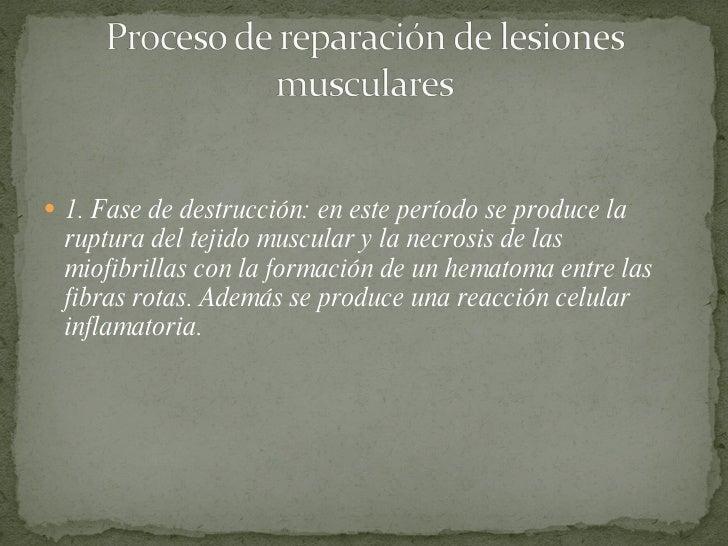 <ul><li>1. Fase de destrucción: en este período se produce la ruptura del tejido muscular y la necrosis de las miofibrilla...