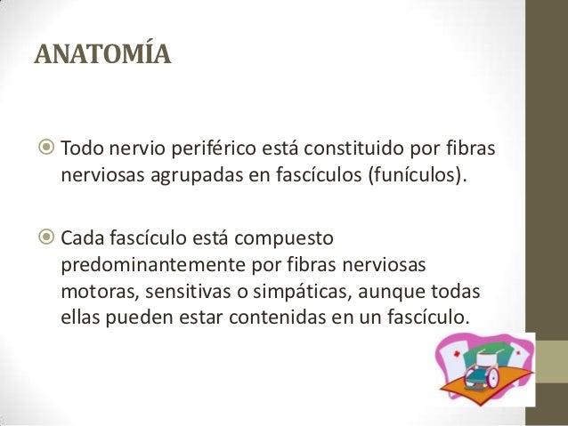 Lesiones nerviosas Slide 2
