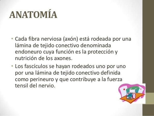 Lesiones nerviosas Slide 3