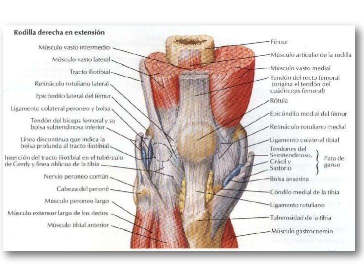 Lesiones y fx._de_mmii