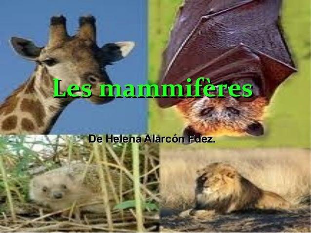 Les mammifères  De Helena Alarcón Fdez.