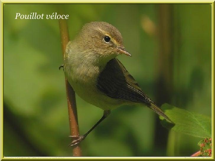 Les Oiseaux De Nos Jardins Frb