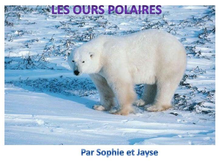 Les ours polaires sont blancs. Leur taille est environ 1.60m.Les ours polaires ont de grands pieds.