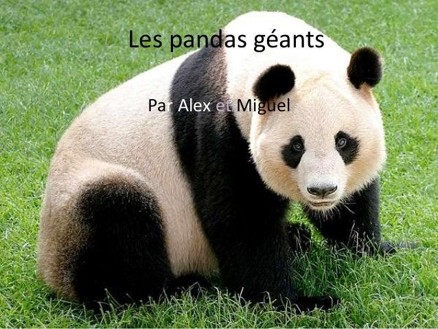 Par Alex et Miguel Les pandas géants