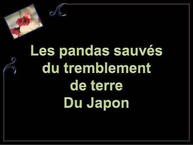 Le tremblement de terre sest produit juste àlendroit où les pandas géants vivaient. La plupart des pandas ont été secourus...