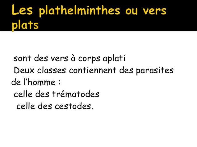 Les aspects des parasites vivant dans lintestin de la personne