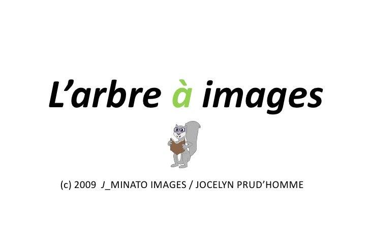 L'arbre à images<br />(c) 2009  J_MINATO IMAGES / JOCELYN PRUD'HOMME<br />