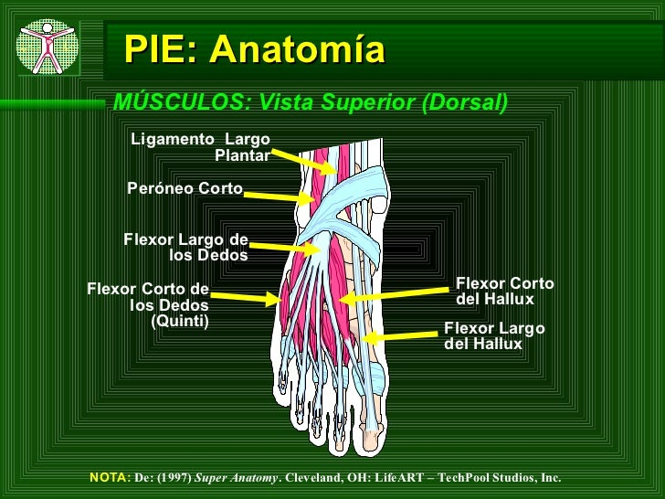 Lesiones de Pie