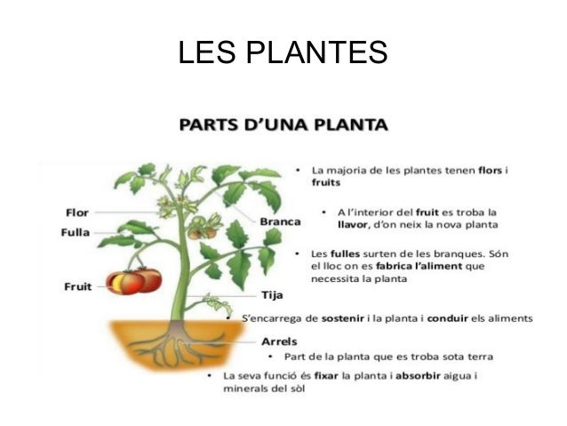 Les plantes for Site de plante