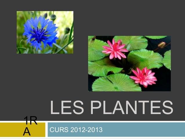 LES PLANTES CURS 2012-2013 1R A