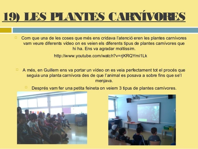 Les plantes 1 a for Plante carnivore 01