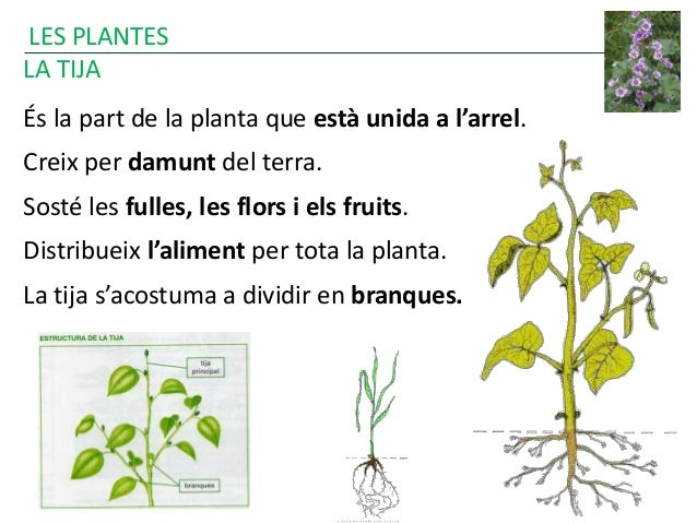 Les plantes 2015 for Les plantes