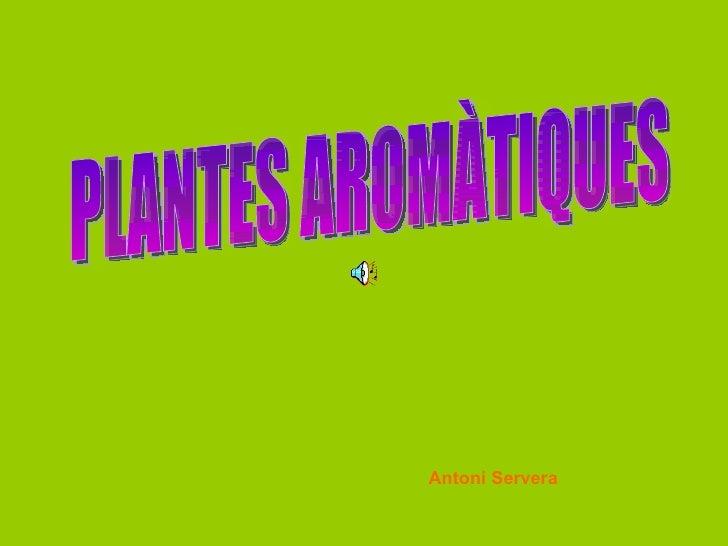 PLANTES AROMÀTIQUES Antoni Servera