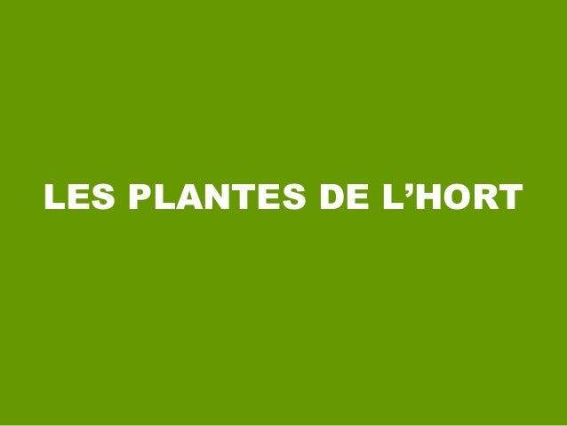 LES PLANTES DE L'HORT